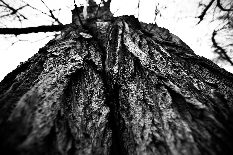 Dark Nature by Laurent Orseau #124