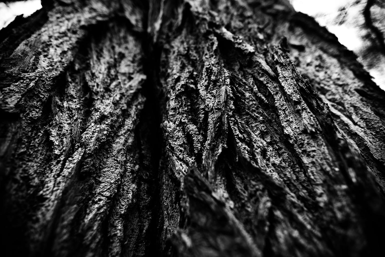 Dark Nature by Laurent Orseau #125