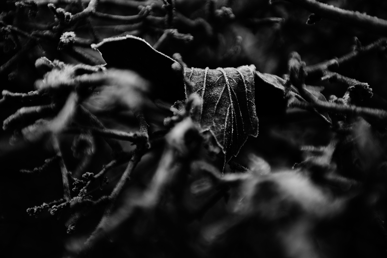 Dark Nature by Laurent Orseau #126