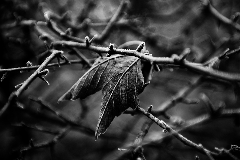 Dark Nature by Laurent Orseau #127