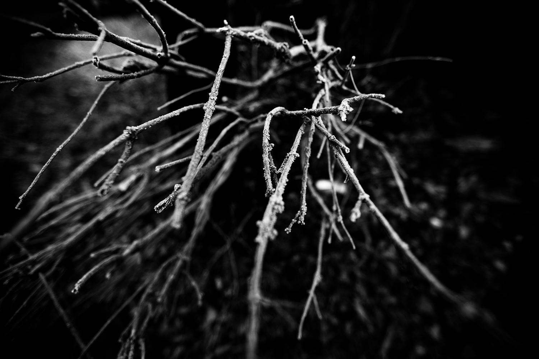 Dark Nature by Laurent Orseau #128