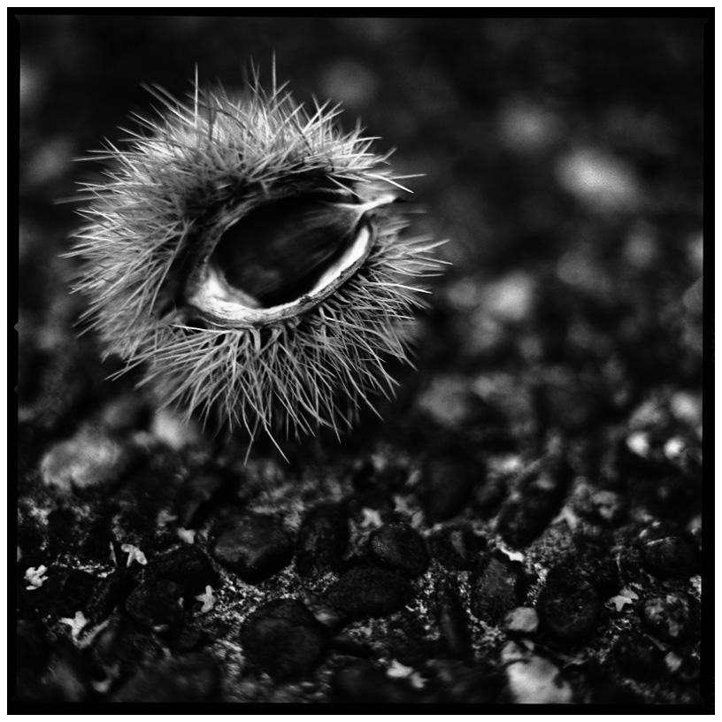 Dark Nature by Laurent Orseau #13