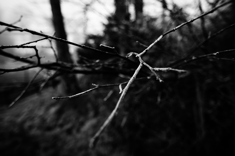 Dark Nature by Laurent Orseau #130