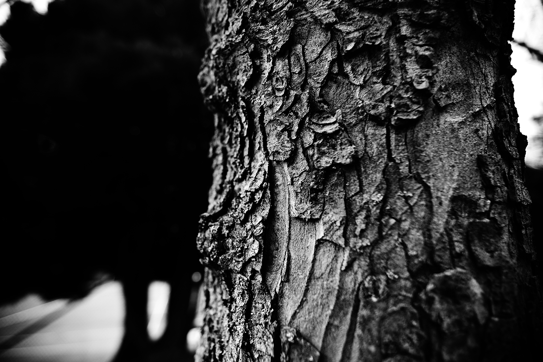 Dark Nature by Laurent Orseau #131
