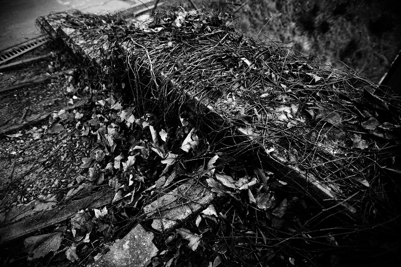 Dark Nature by Laurent Orseau #132