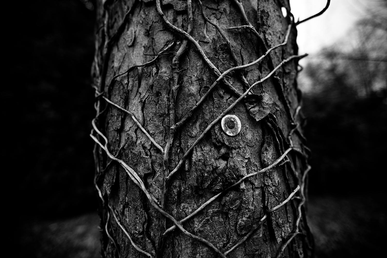 Dark Nature by Laurent Orseau #133
