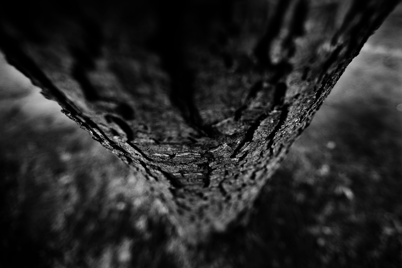 Dark Nature by Laurent Orseau #135