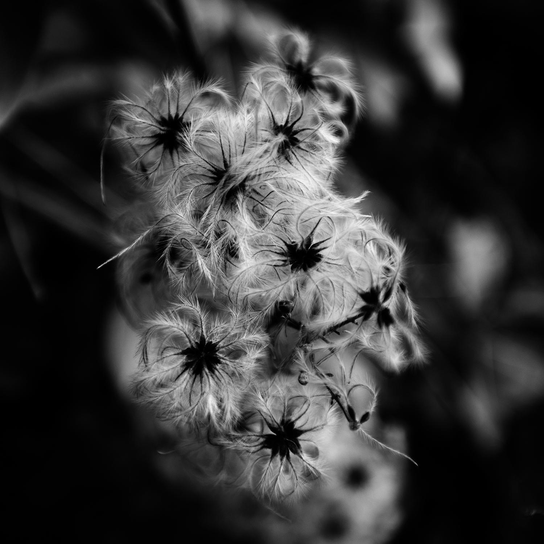 Dark Nature by Laurent Orseau #137