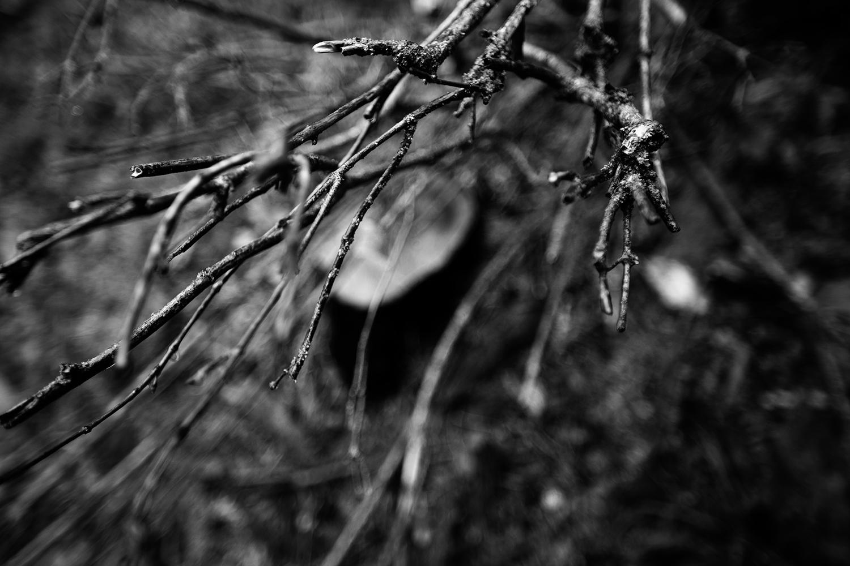 Dark Nature by Laurent Orseau #139