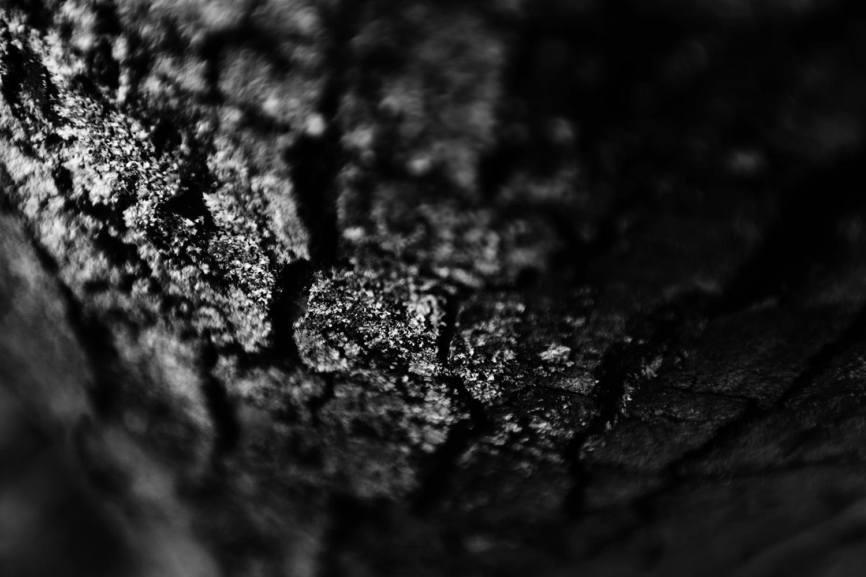 Dark Nature by Laurent Orseau #141
