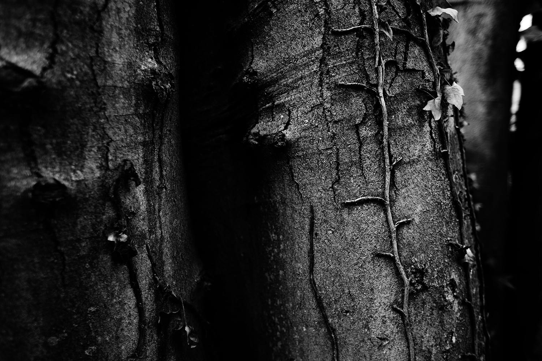 Dark Nature by Laurent Orseau #144