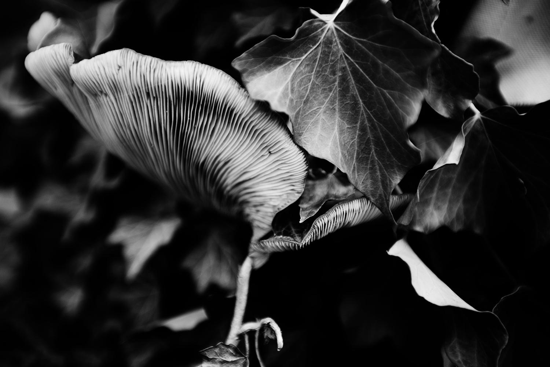 Dark Nature by Laurent Orseau #145