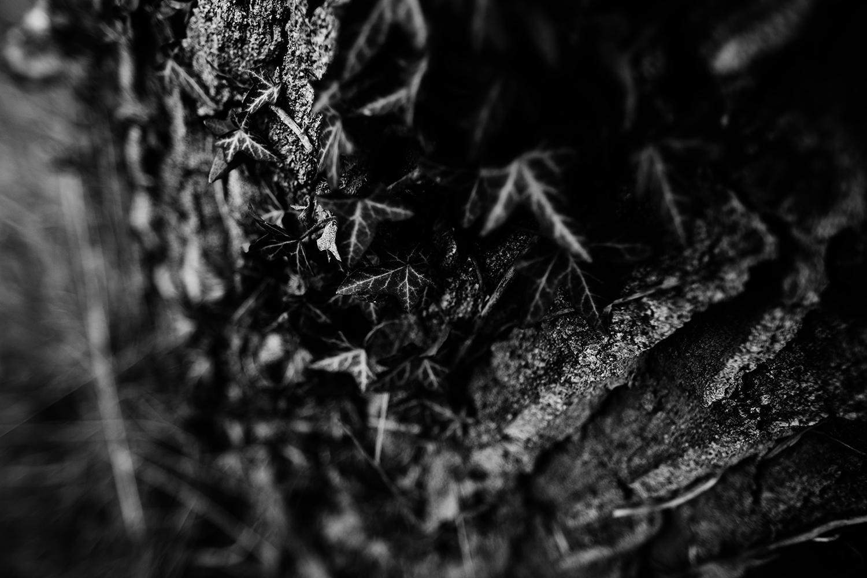 Dark Nature by Laurent Orseau #146