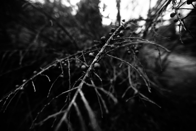 Dark Nature by Laurent Orseau #149