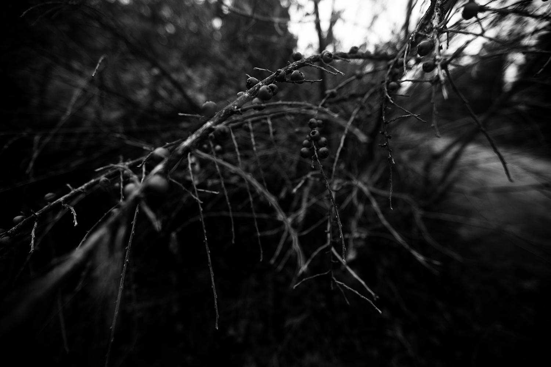 Dark Nature by Laurent Orseau #150