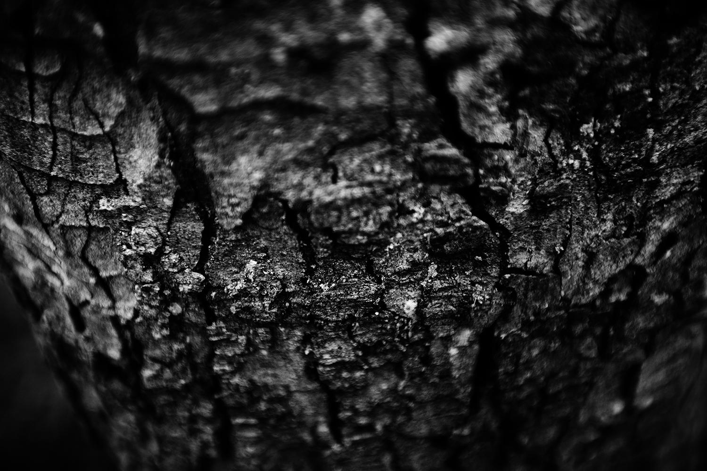 Dark Nature by Laurent Orseau #151