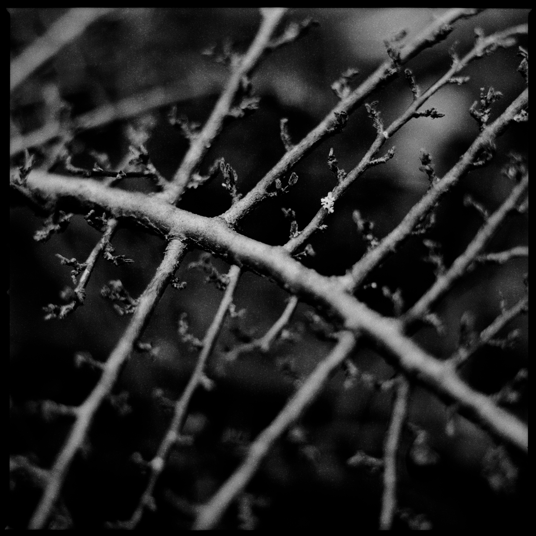Dark Nature by Laurent Orseau #152