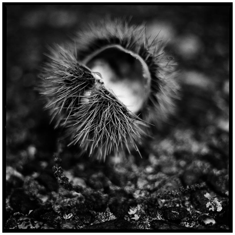 Dark Nature by Laurent Orseau #17