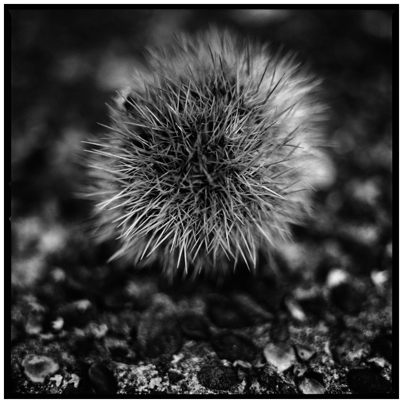 Dark Nature by Laurent Orseau #18