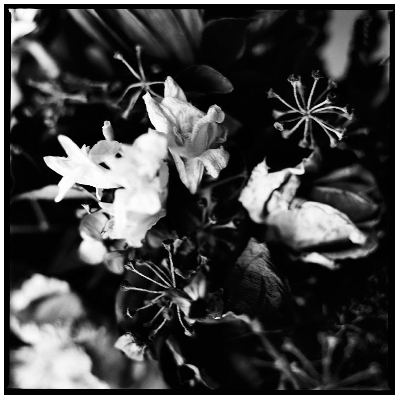 Dark Nature by Laurent Orseau #19
