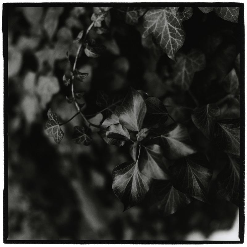 Dark Nature by Laurent Orseau #2