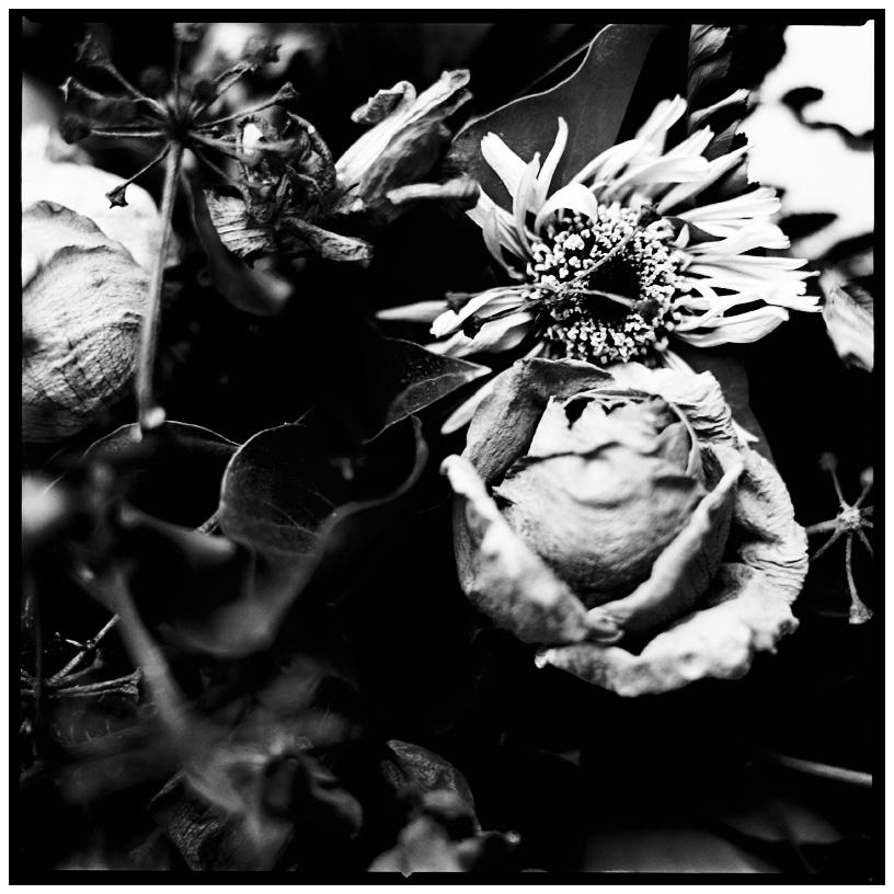 Dark Nature by Laurent Orseau #20