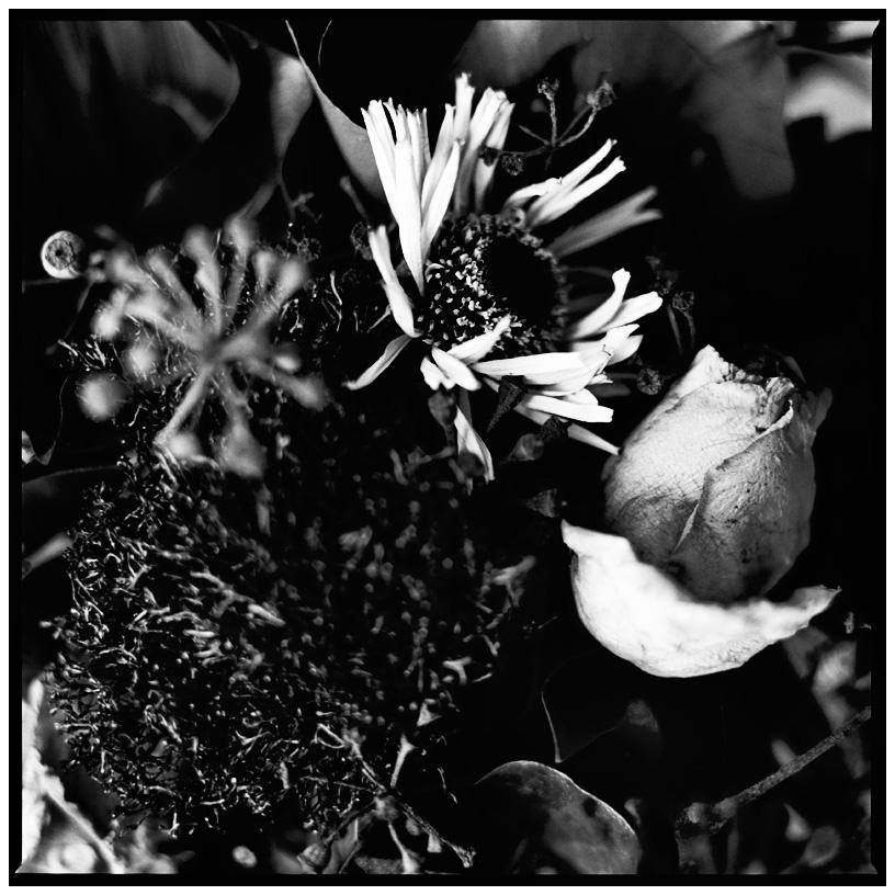 Dark Nature by Laurent Orseau #21