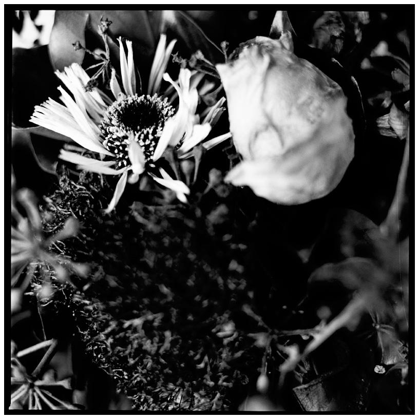 Dark Nature by Laurent Orseau #22