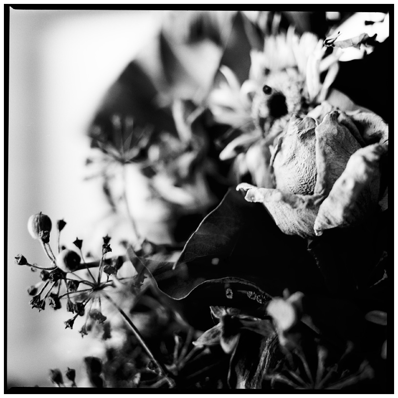 Dark Nature by Laurent Orseau #23