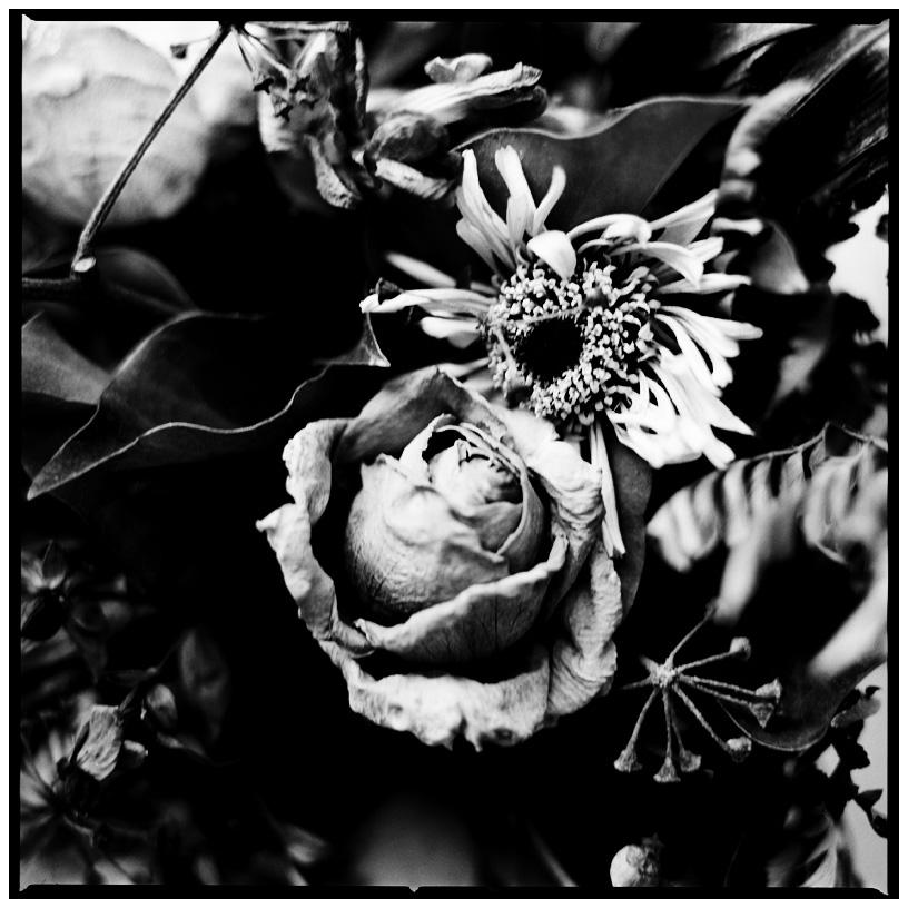 Dark Nature by Laurent Orseau #24