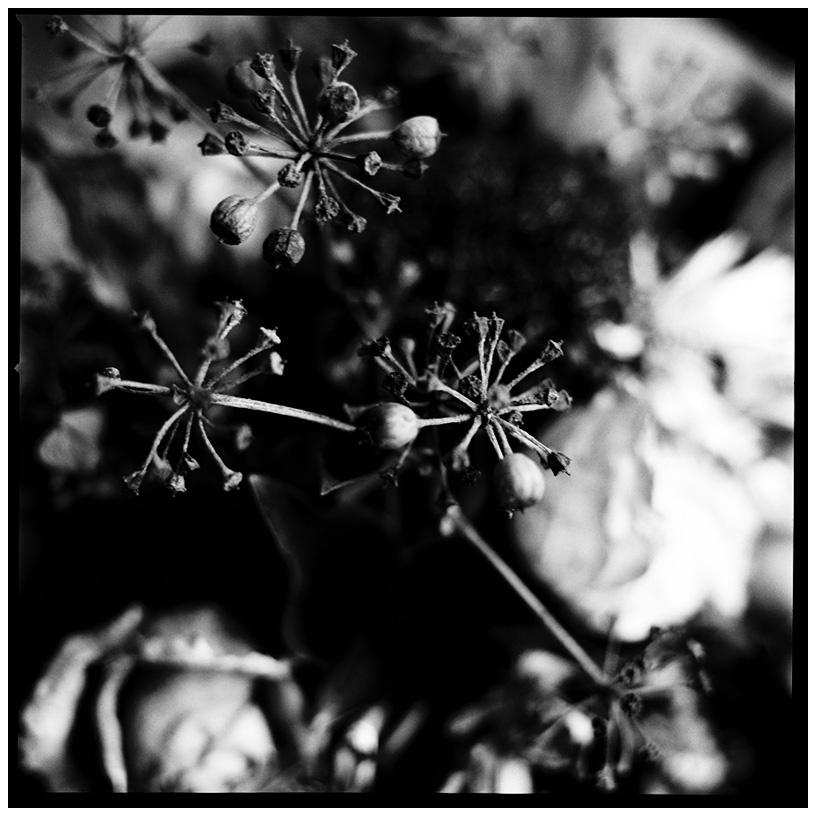 Dark Nature by Laurent Orseau #25