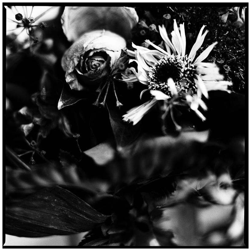 Dark Nature by Laurent Orseau #27