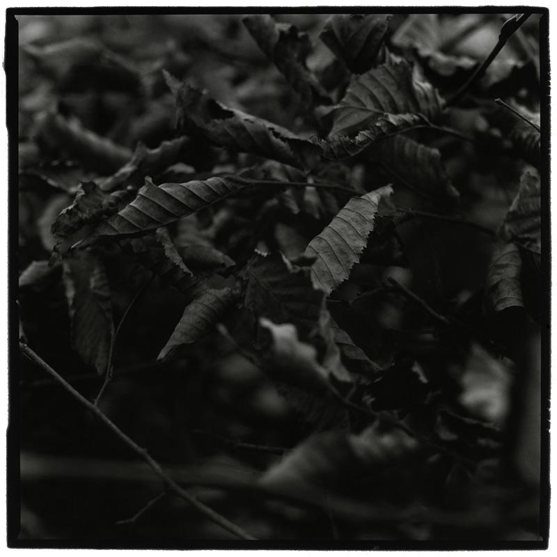 Dark Nature by Laurent Orseau #3