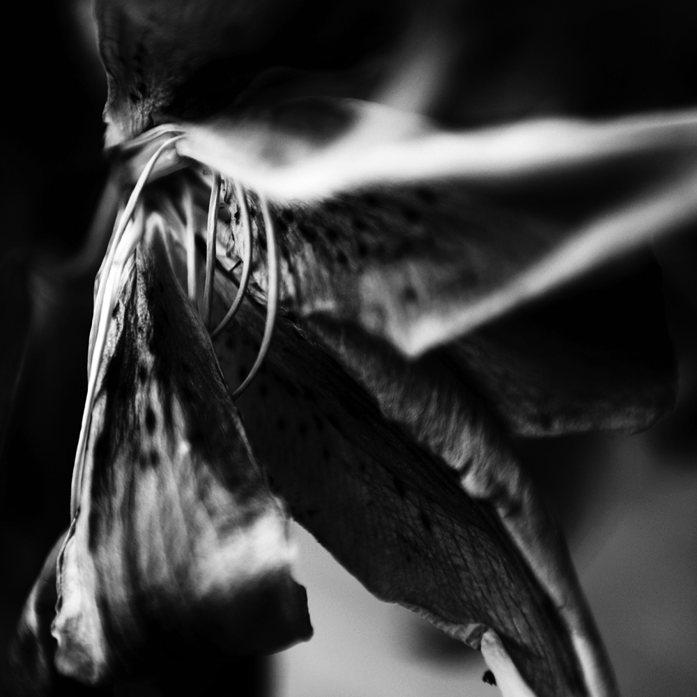 Dark Nature by Laurent Orseau #34