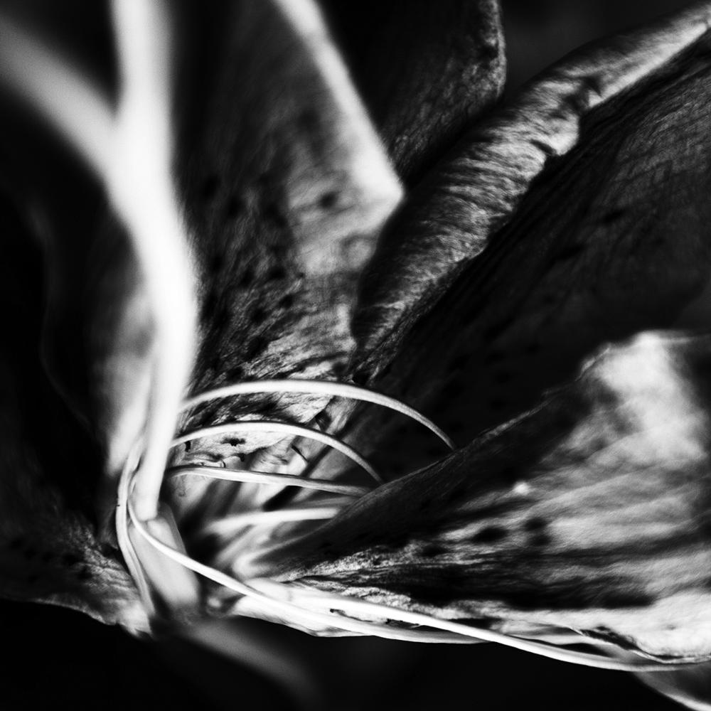 Dark Nature by Laurent Orseau #35