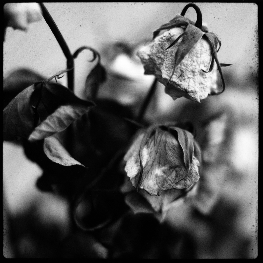 Dark Nature by Laurent Orseau #38