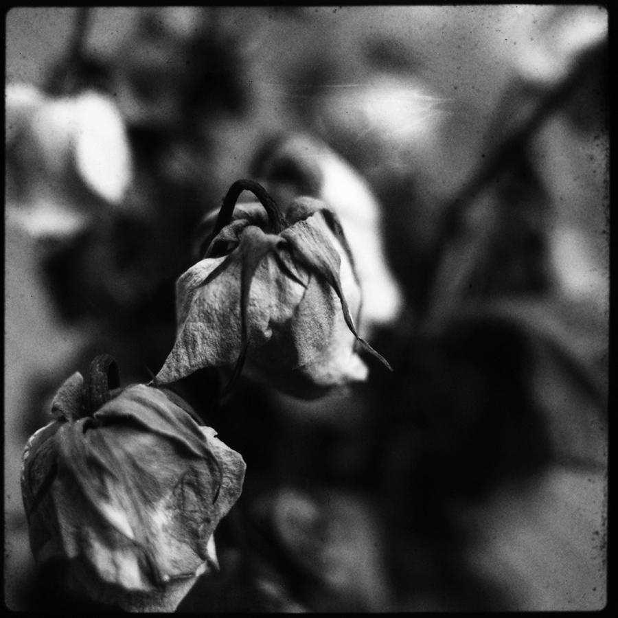 Dark Nature by Laurent Orseau #39