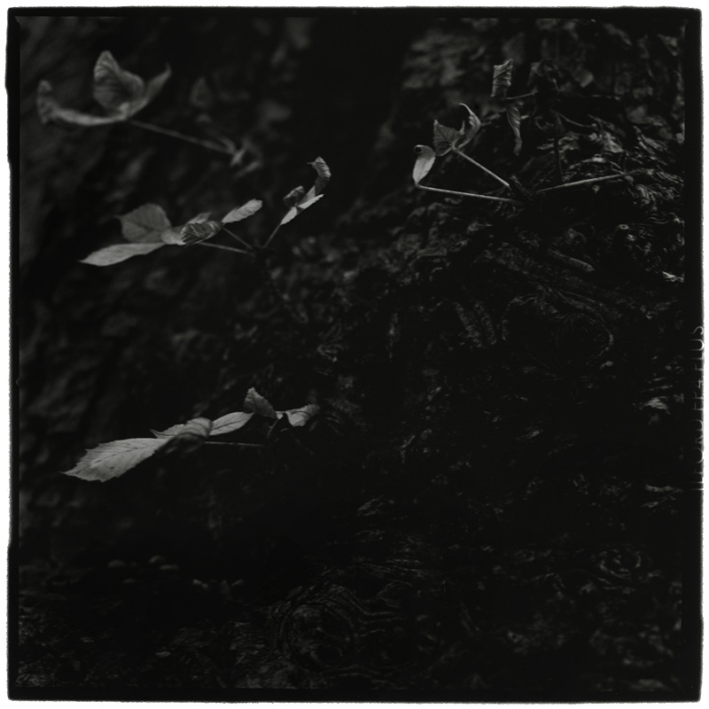Dark Nature by Laurent Orseau #4