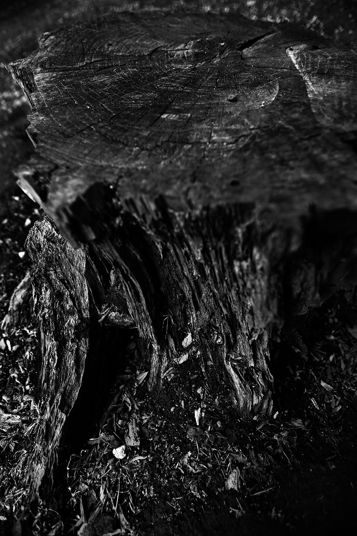 Dark Nature by Laurent Orseau #44