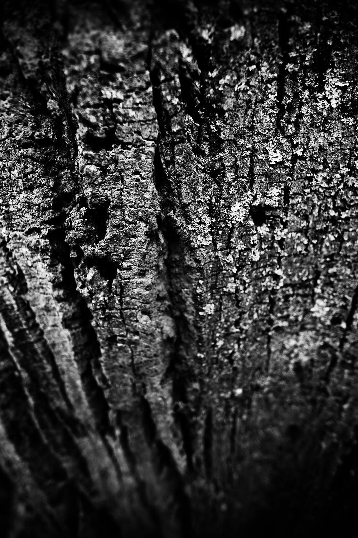 Dark Nature by Laurent Orseau #45