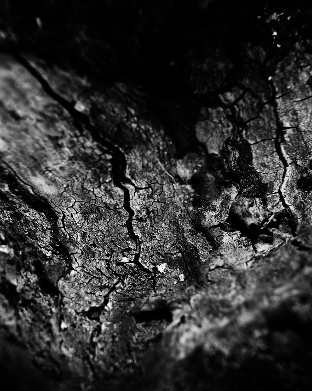 Dark Nature by Laurent Orseau #46