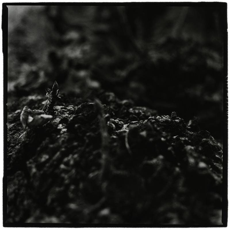 Dark Nature by Laurent Orseau #5