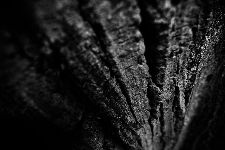 Dark Nature by Laurent Orseau #51