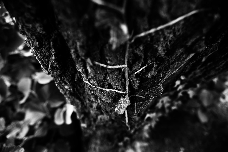 Dark Nature by Laurent Orseau #52