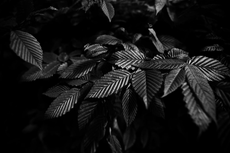 Dark Nature by Laurent Orseau #53