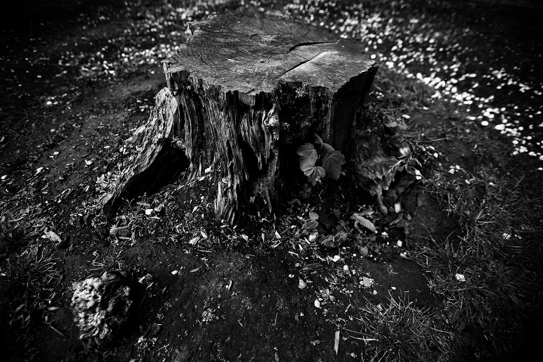 Dark Nature by Laurent Orseau #54
