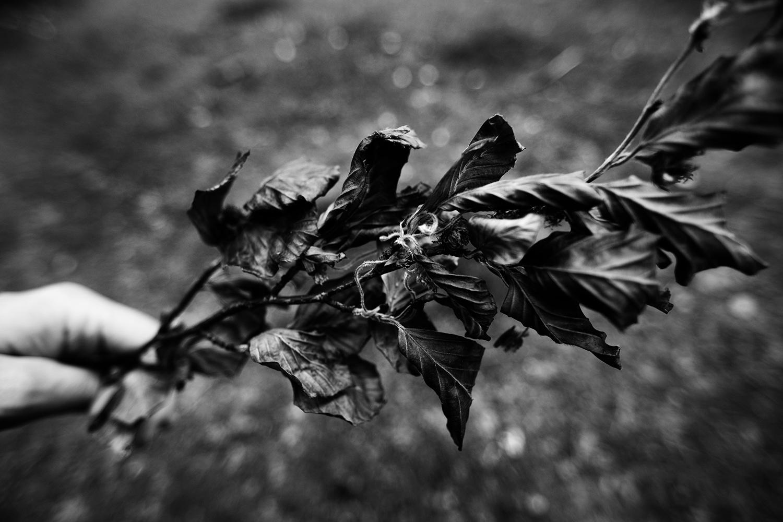 Dark Nature by Laurent Orseau #58