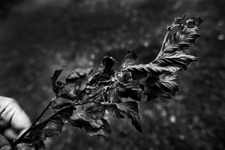 Dark Nature by Laurent Orseau #59