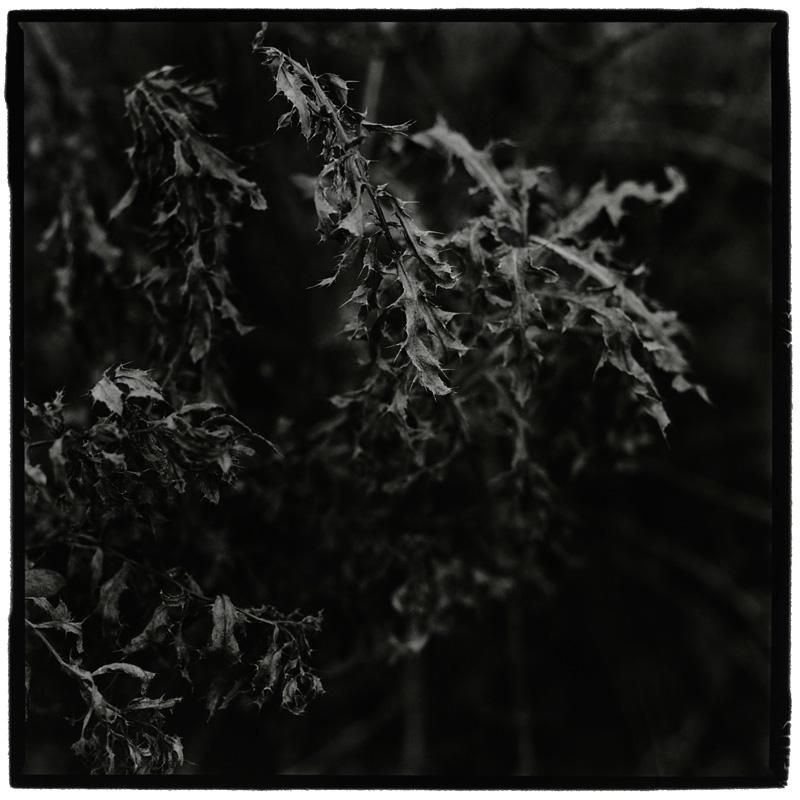 Dark Nature by Laurent Orseau #6