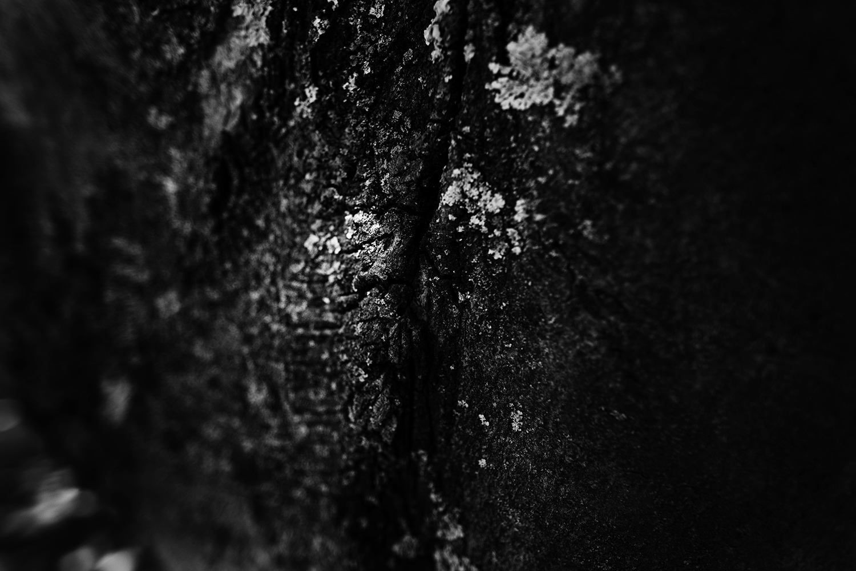 Dark Nature by Laurent Orseau #60